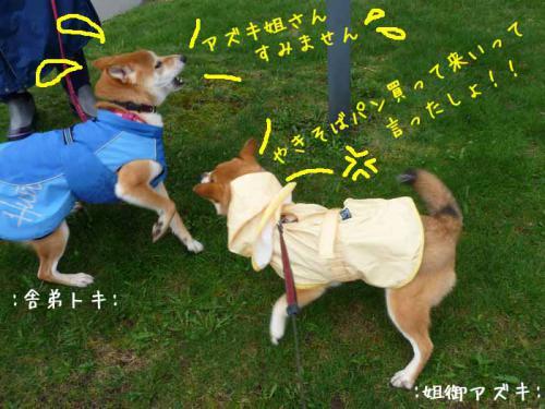 P1370596-AZUKI.jpg