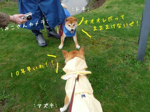 P1370597-AZUKI.jpg