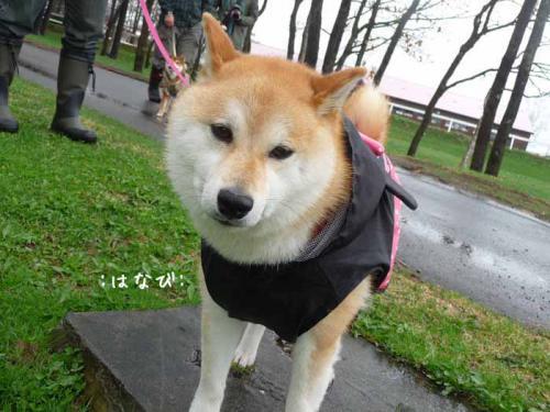 P1370599-AZUKI.jpg