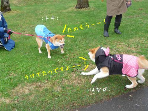 P1370613-AZUKI.jpg