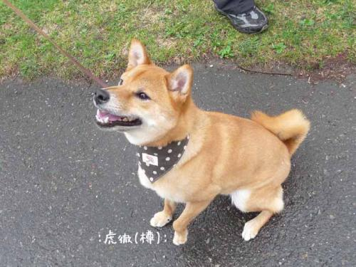 P1370618-AZUKI.jpg