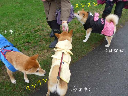 P1370621-AZUKI.jpg