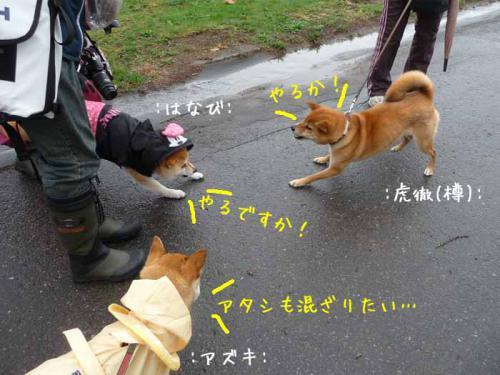 P1370627-AZUKI.jpg