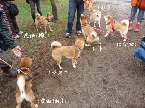 P1370656-AZUKI.jpg