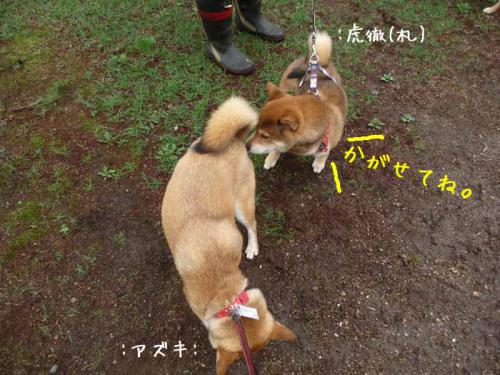 P1370667-AZUKI.jpg