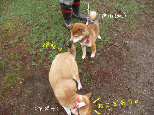P1370668-AZUKI.jpg