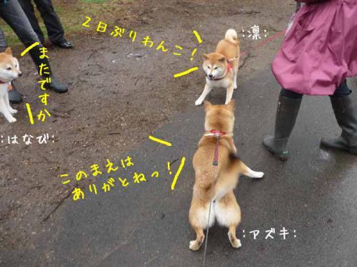 P1370671-AZUKI.jpg