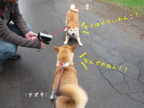 P1370681-AZUKI.jpg