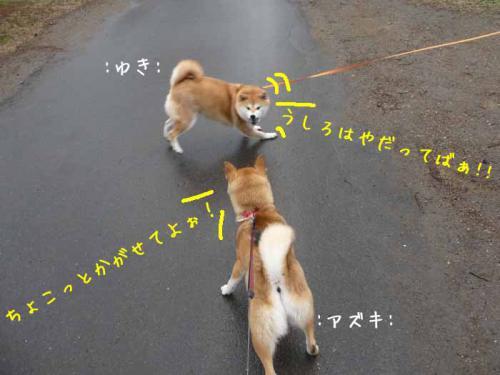 P1370684-AZUKI.jpg