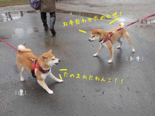 P1370689-AZUKI.jpg