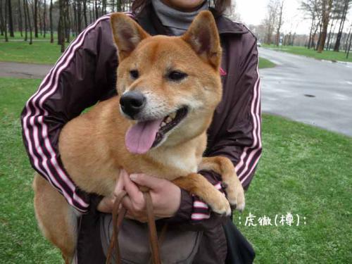 P1370693-AZUKI.jpg