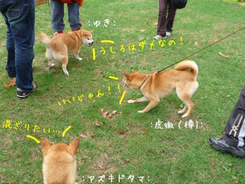 P1370713-AZUKI.jpg