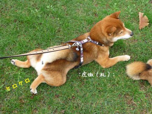 P1370723-AZUKI.jpg