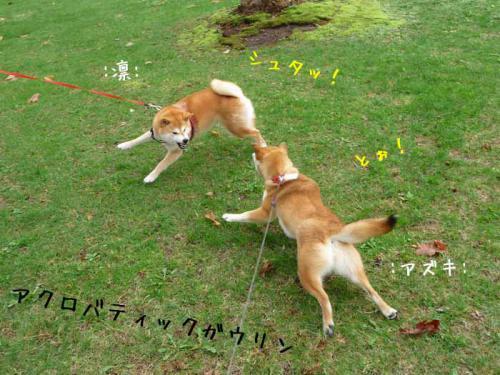 P1370734-AZUKI.jpg