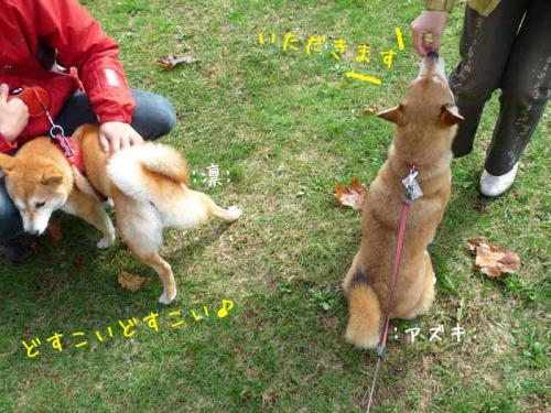 P1370749-AZUKI.jpg