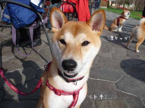 P1370793-AZUKI.jpg