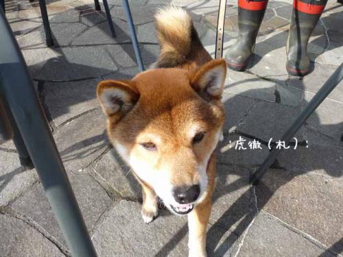 P1370796-AZUKI.jpg