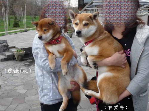 P1370836-AZUKI.jpg