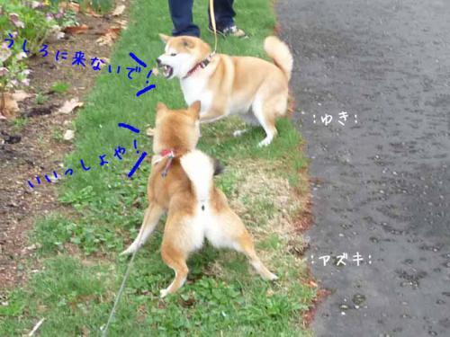 P1370854-AZUKI.jpg
