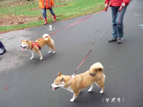 P1370943-AZUKI.jpg