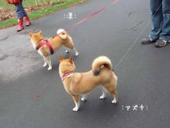 P1370944-AZUKI.jpg