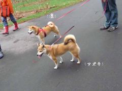 P1370945-AZUKI.jpg