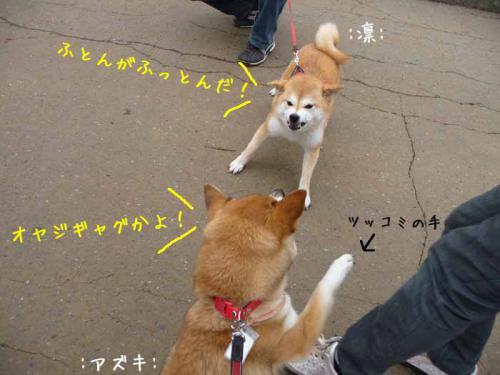 P1370974-AZUKI.jpg