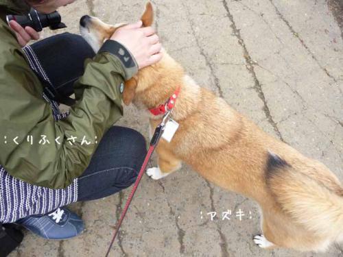 P1370984-AZUKI.jpg