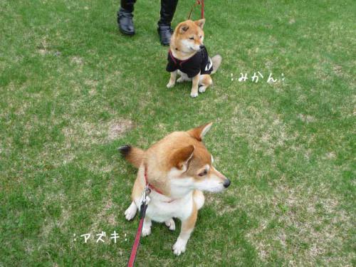 P1380113-AZUKI.jpg