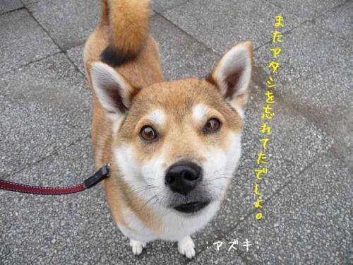 P1380133-AZUKI.jpg