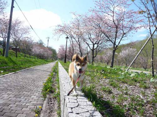 P1380623-AZUKI.jpg