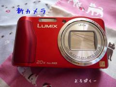 P1380665-AZUKII.jpg