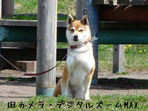 P1380669-AZUKI.jpg