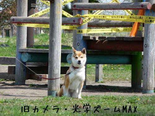 P1380670-AZUKI.jpg