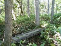 越後道木の橋
