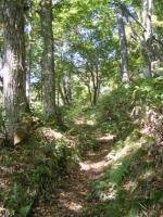 山頂までの道