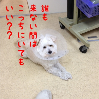 fc2blog_20130220185736793.jpg