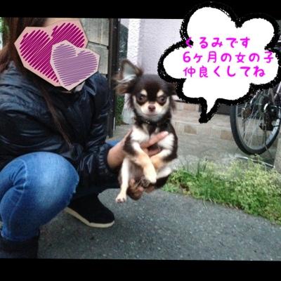fc2blog_20130410225634e90.jpg