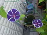 RIMG1738_20120717100002.jpg