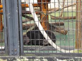 平川動物園6
