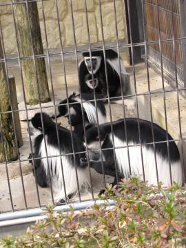 平川動物園11