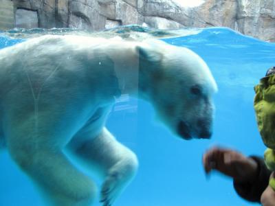 平川動物園12