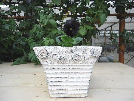 ネロ 鉢植え