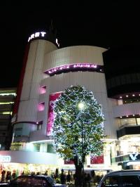 ブログ ラフォーレの木