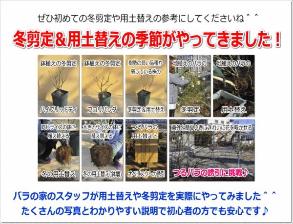2012 12 17 剪定&誘引