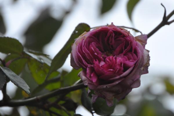 2012 12 17 エルンストカルバ 花