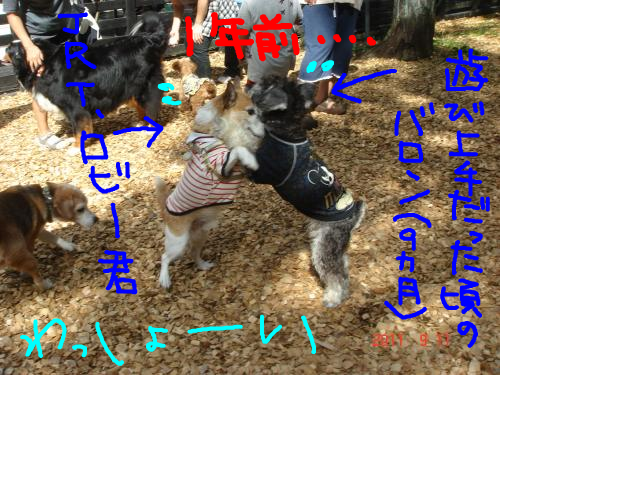 snap_baron20101214_20121010129.jpg
