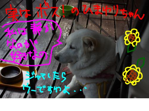 snap_baron20101214_201210112610.jpg
