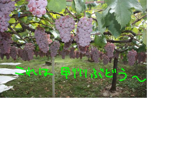 snap_baron20101214_2012102104247.jpg