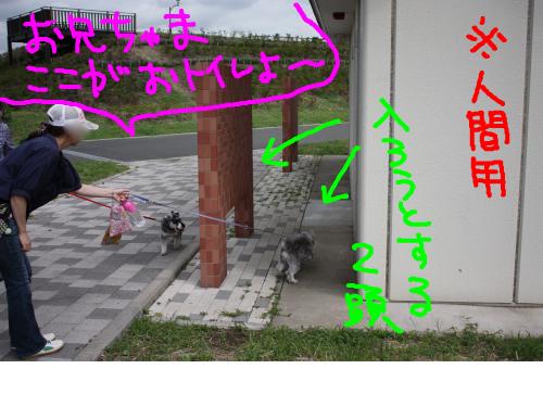 snap_baron20101214_2012104224227.jpg